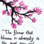A Flower That Blooms In Adversity Pinterest