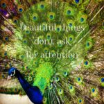 Peacock Beauty Quotes Tumblr