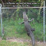 Funny Alligator Quotes Facebook