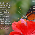 Good Morning Butterfly Messages Twitter