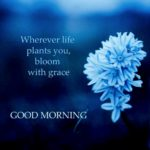 Good Morning With Flowers And Quotes Facebook